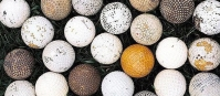 Balling With Golf Collectibles - Golf Balls